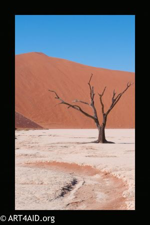 Solitary Survival - Namibia -
